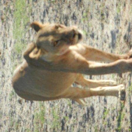 Kasane, Botswana: photo9.jpg