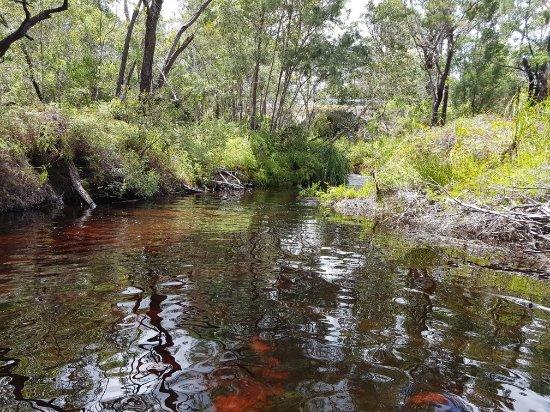 Searys Creek 사진