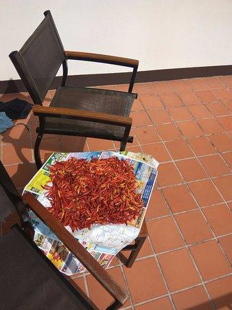 Best Western Phuket Ocean Resort: Chillies drying in balcony - Chambermaid's great initiative