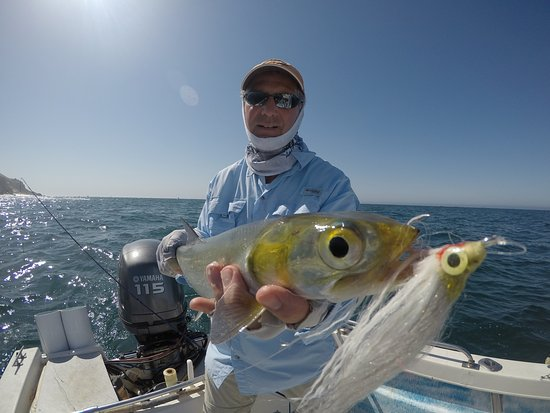 Morgan with roosterfish cabo mahi mahi for Rooster fish cabo