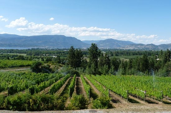 4-Hour Okanagan Valley Wine Tasting...