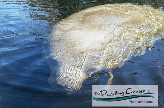 Manatee Encounter - Kayaking Tour at...