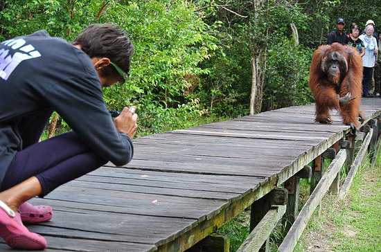 Orangutan Tour Liveaboard  3 days 2...