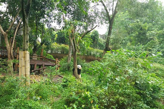 All-Inclusive Chengdu Highlight Panda...