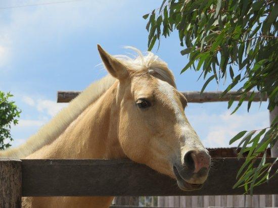 Scone, Australia: Neighbour
