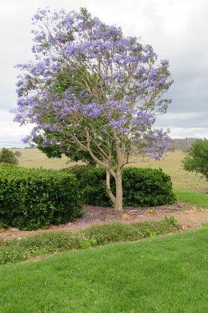 Scone, Australia: Garden area