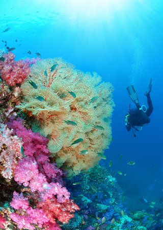 Chalong, Tailandia: Underwater beauty
