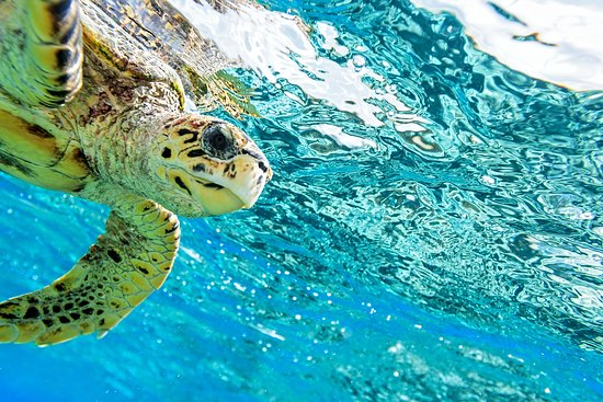 Chalong, تايلاند: Turtle