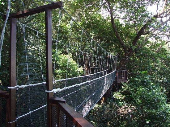 Tuaran, Malesia: Canopy Walkway