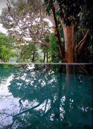 Langkawi District, Malaysia: Forest tree perfectly reflected by the infinity pool