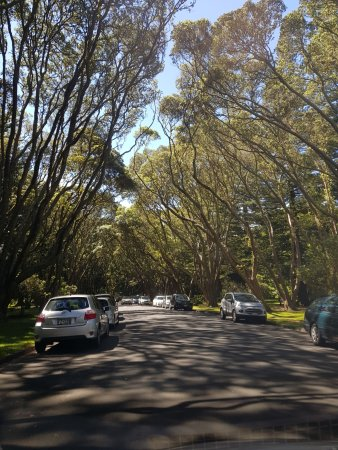 Cornwall Park: Loads of parking available