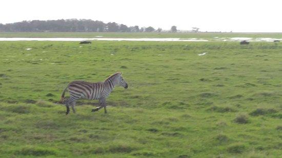 Ombretta Tours & Safaris - Day Tours : P_20171128_172101_large.jpg