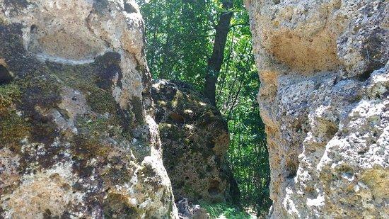 Carla Pau Guida Ambientale Escursionistica: P_20170621_133253_large.jpg
