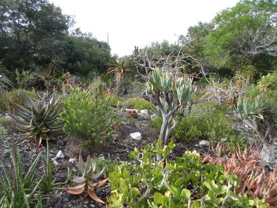 Fernkloof Nature Reserve: Fernkloof Flowers