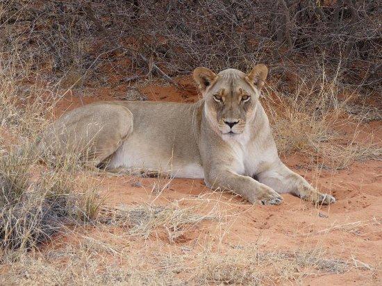 Kalahari Game Lodge: Found you
