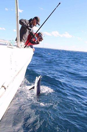 Balmain, Australia: Mako Shark