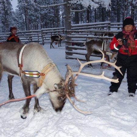 Lapland Safaris Saariselka
