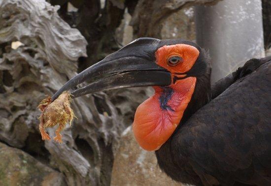 Hoedspruit, South Africa: Animals at HESC