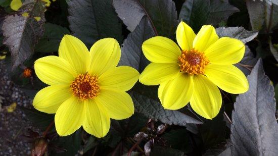 Phoenix Park: Beautiful flowers from the garden