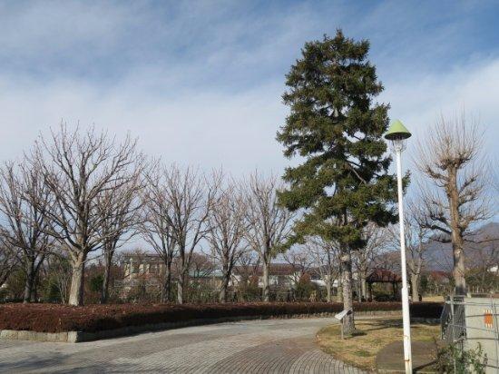 Nakano, اليابان: 公園の様子
