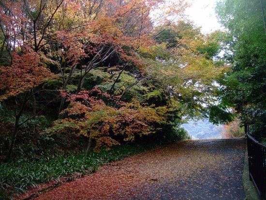 Ibaraki, Japan: 紅葉9