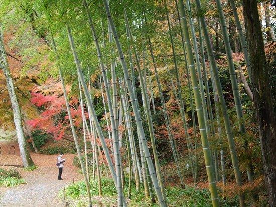 Ibaraki, Japan: 紅葉10