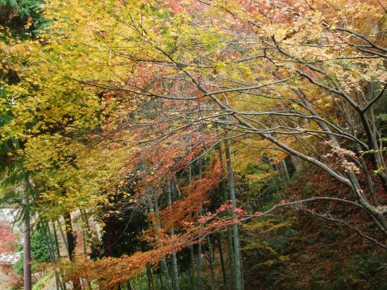 Ibaraki, Japan: 紅葉11