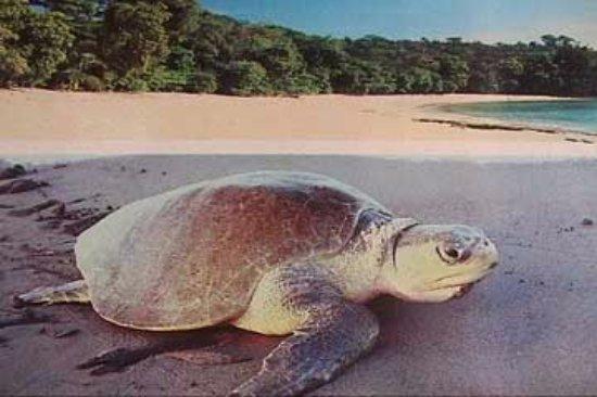 Hotel RipJack Inn: Leatherback Turtle Tour