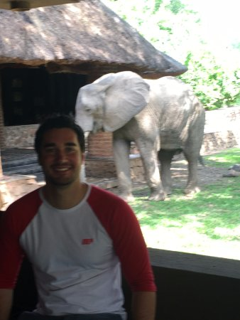 South Luangwa National Park, Zambie : Chilling with the elephants at reception