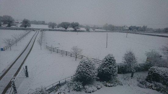 Dodleston, UK: DSC_3385_large.jpg