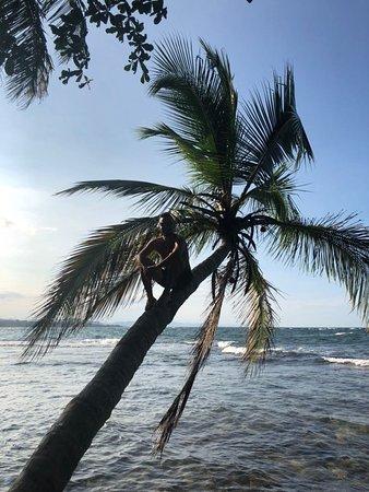 Congo Bongo Ecolodges Costa Rica: IMG-20171119-WA0038_large.jpg