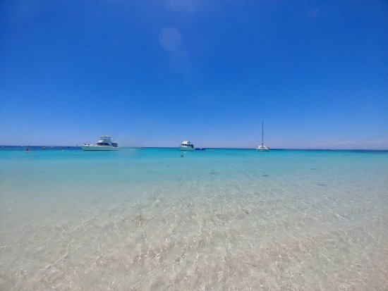 Rottnest Island, Australia: Can you say no to this?