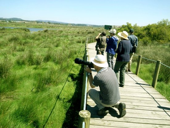 North Birding Tours - Day Tours