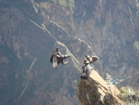 South Adventure Peru Tours : the Colca Canyon, in the Andes mountain.