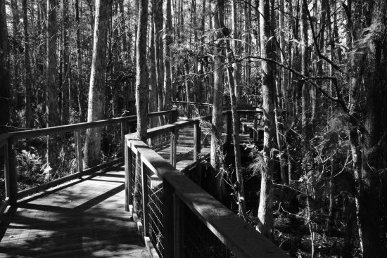 Clewiston, FL: part of boardwalk