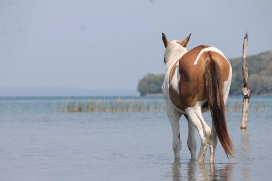 El Remate, Guatemala: Wild horses by the lake