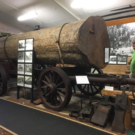 The Kauri Museum: photo3.jpg