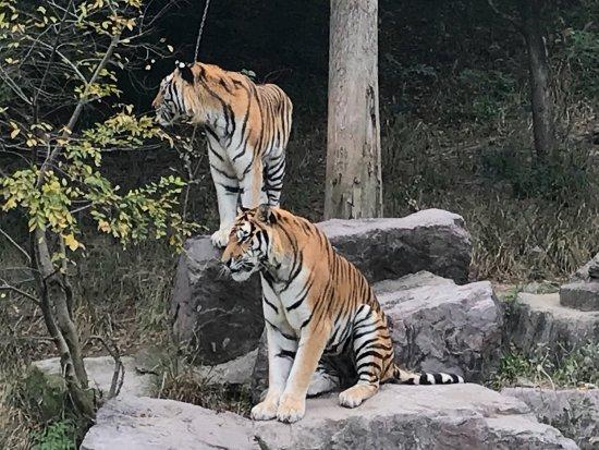 Ningbo, Chiny: 宁波动物园
