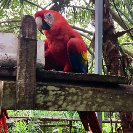 Quepos, Costa Rica: Macaws at the Ranch House
