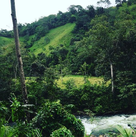Quepos, Costa Rica: So many shades of greeeeeeen!