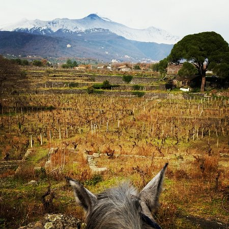 Zafferana Etnea, Italie : Nei dintorni delle nostre scuderie
