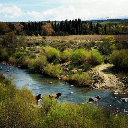 Zafferana Etnea, Italia: Bronte cavalli liberi nel fiume.