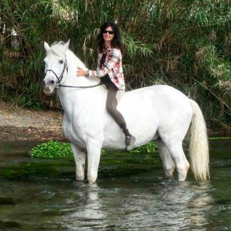 Zafferana Etnea, Italia: My stallion! Furioso.
