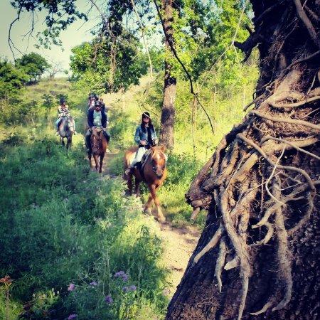 Zafferana Etnea, Italia: Passeggiata di un'ora nel bosco..adatta a principianti. One hour in the woods