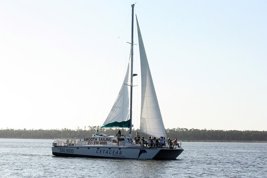 Orange Beach, AL : The Cetacean Sailboat is available for Private Cruises as well.
