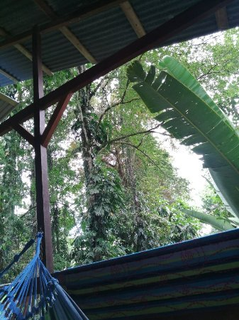 Cocles, Costa Rica: IMG_20171203_100952_large.jpg