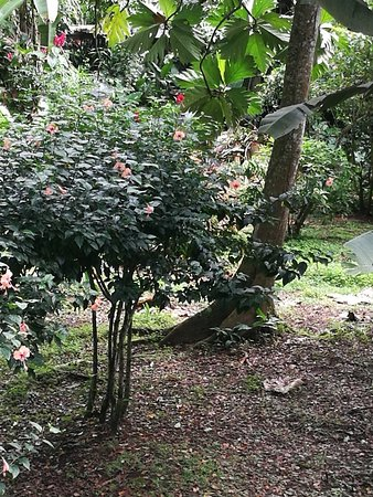 Cocles, Costa Rica: IMG_20171203_095207_large.jpg
