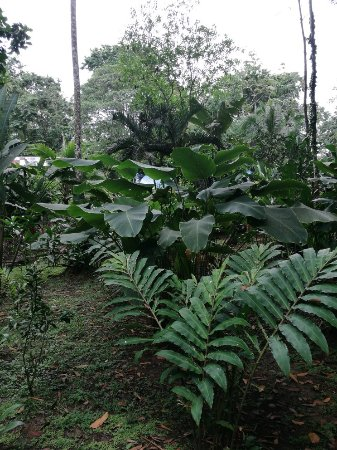 Cocles, Costa Rica: IMG_20171203_102101_large.jpg