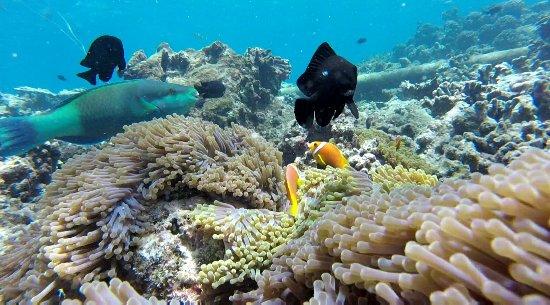 Thulusdhoo Island: IMG-20171014-WA0016_large.jpg