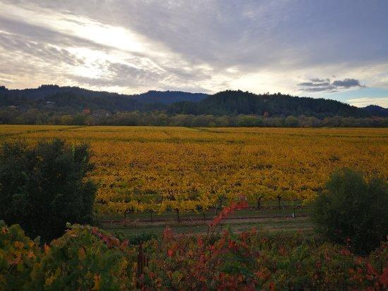 Healdsburg, Californië: view